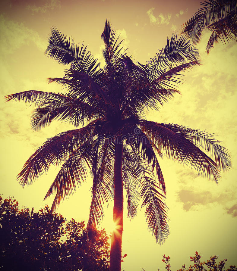 Retro immagine filtrata d'annata della palma al tramonto immagini stock