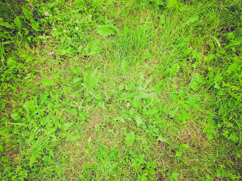 Retro look Grass meadow stock images