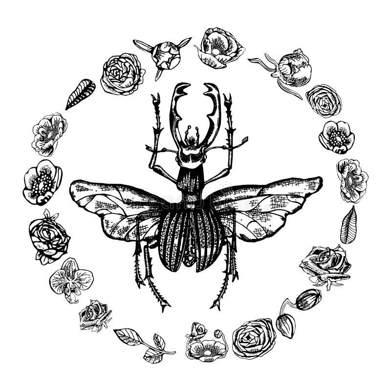 Retro Lucanus Cervus w okręgu piękni kwiaty, ręka rysująca w czarny i biały zdjęcia stock