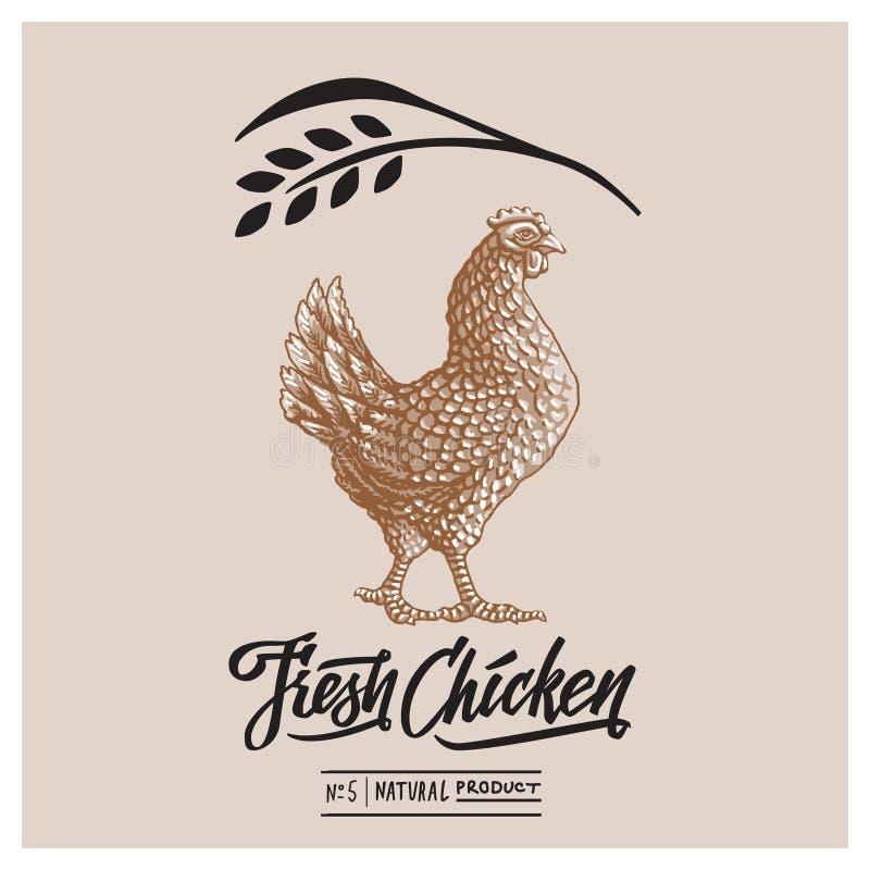 Retro modello disegnato di progettazione e testo calligrafico con l'incisione dell'arte del pollo fotografia stock libera da diritti