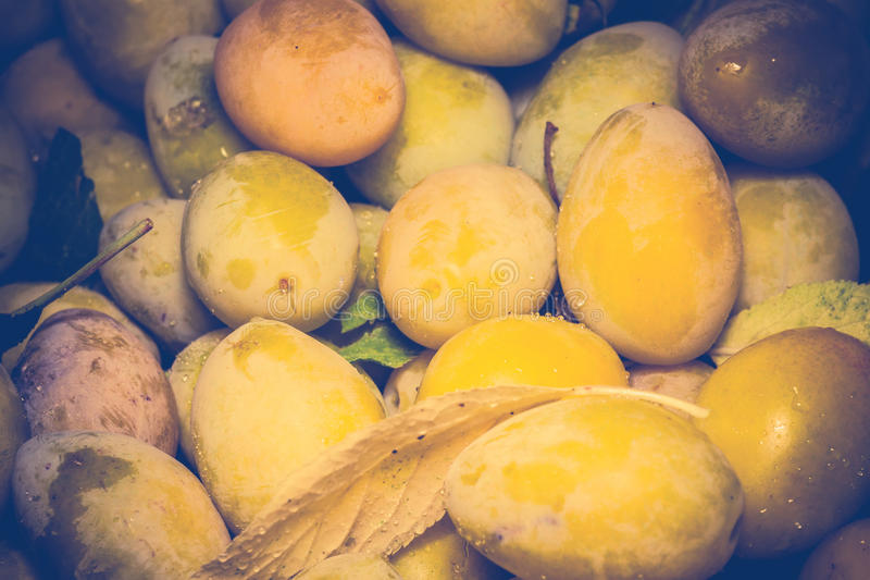 Retro mogna gula plommoner royaltyfria foton