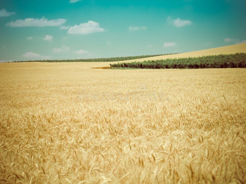 Retro oogsttijd royalty-vrije stock foto's