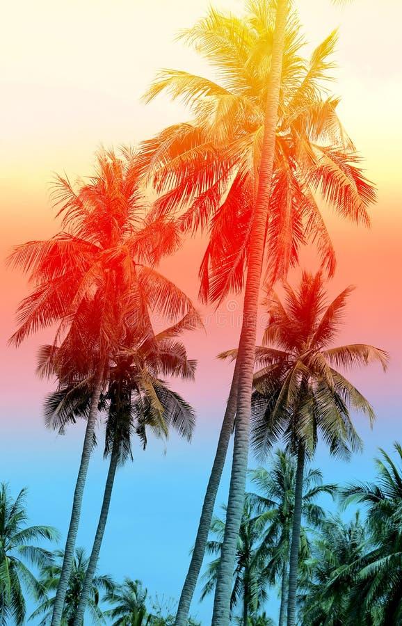 Retro photo of palm trees stock photo