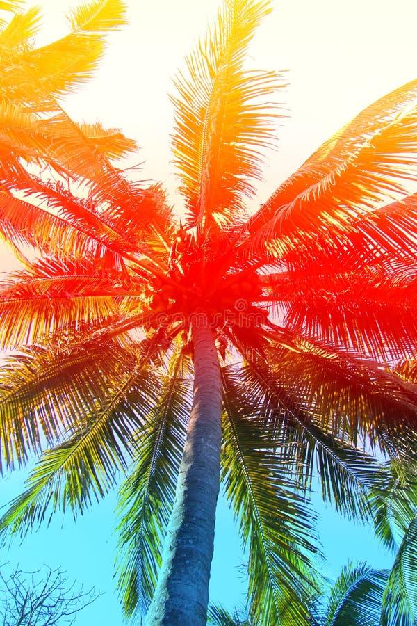 Retro photo of palm trees royalty free illustration