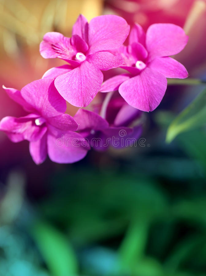 Retro photo of pink orchids royalty free stock photo