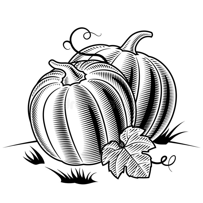 Download Retro Pumpkins Black And White Stock Vector - Illustration of season, white: 24310663