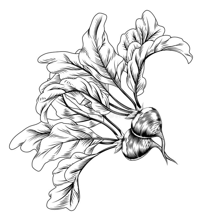 Retro ravanello d'annata o barbabietole dell'intaglio in legno illustrazione vettoriale
