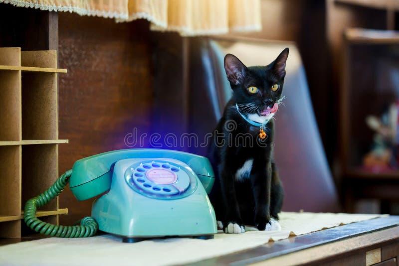 Retro roterande telefon på trätabellen och den svarta katten som sitter på trätabellen arkivfoto