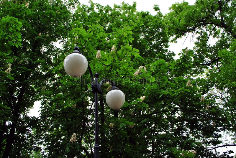 Retro round lantern behind chestnut tree white flowers and new green leaves background stock photography