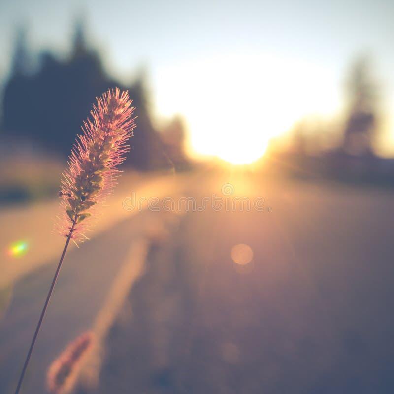 Retro scena della via di tramonto fotografie stock libere da diritti