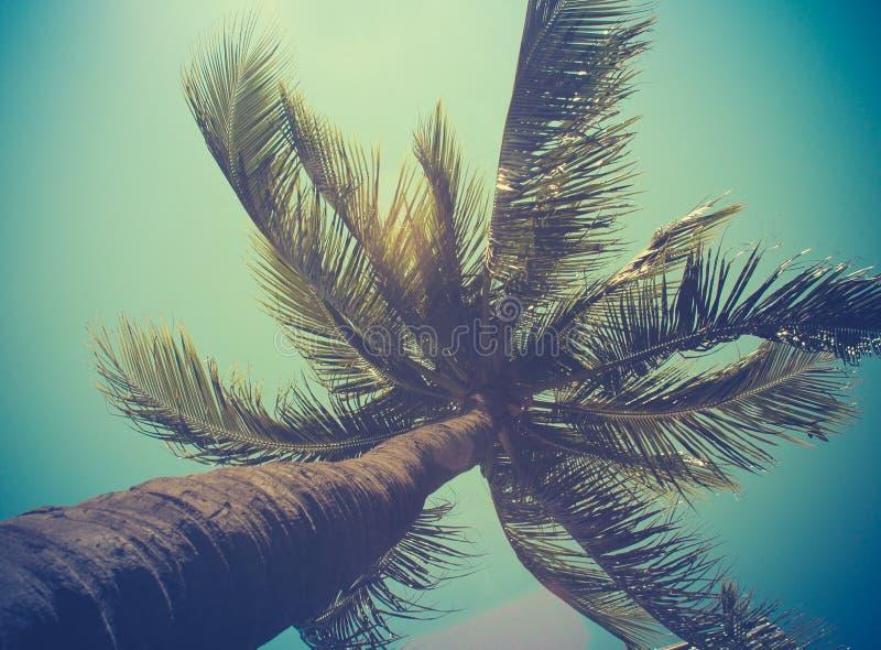 Retro singola palma filtrata immagine stock