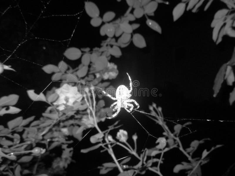 Retro- Spinne auf dem Netz stockfotografie