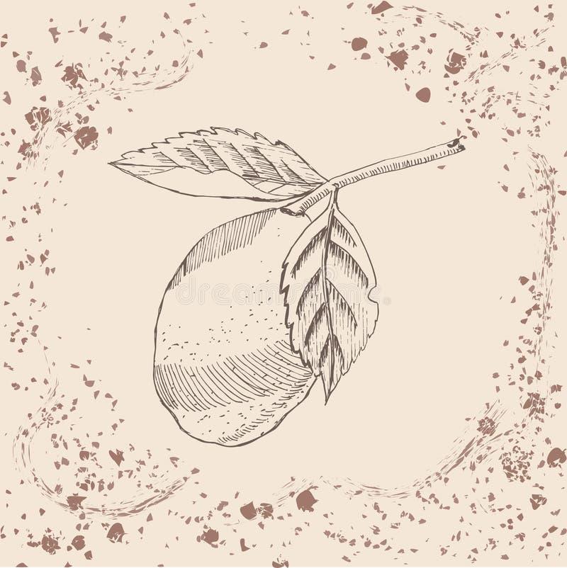 retro stil Den drog handen skissar med citronen på sepiatappningbakgrund royaltyfri illustrationer