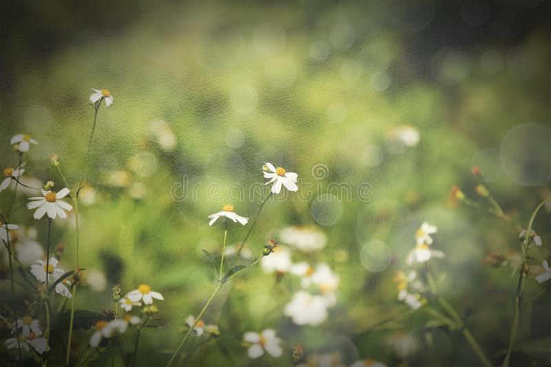 Retro style on small white flower stock images
