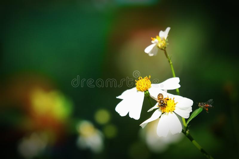 Retro style on small white flower stock photography