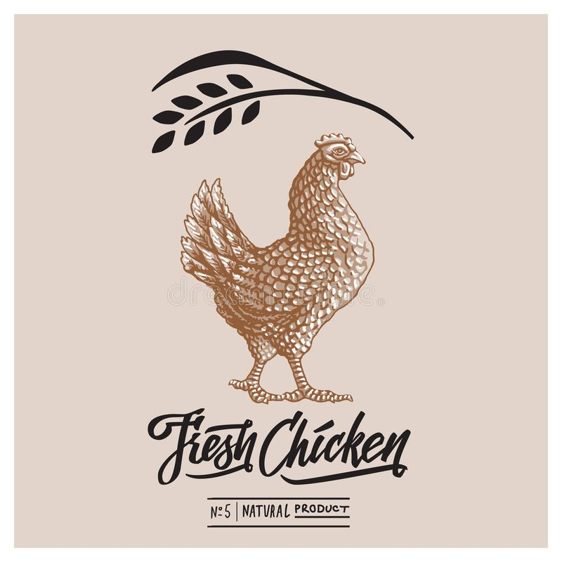 Retro styled design template and calligraphical text with engraving chicken art. royalty free stock photo