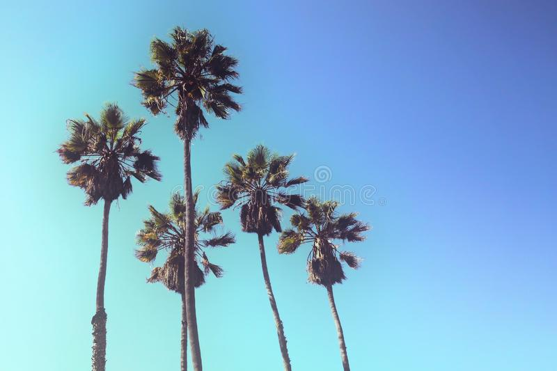 Retro styled upward view of palm trees against blue sky. Retro styled upward view of a group of tall palm trees against blue sky royalty free stock photos