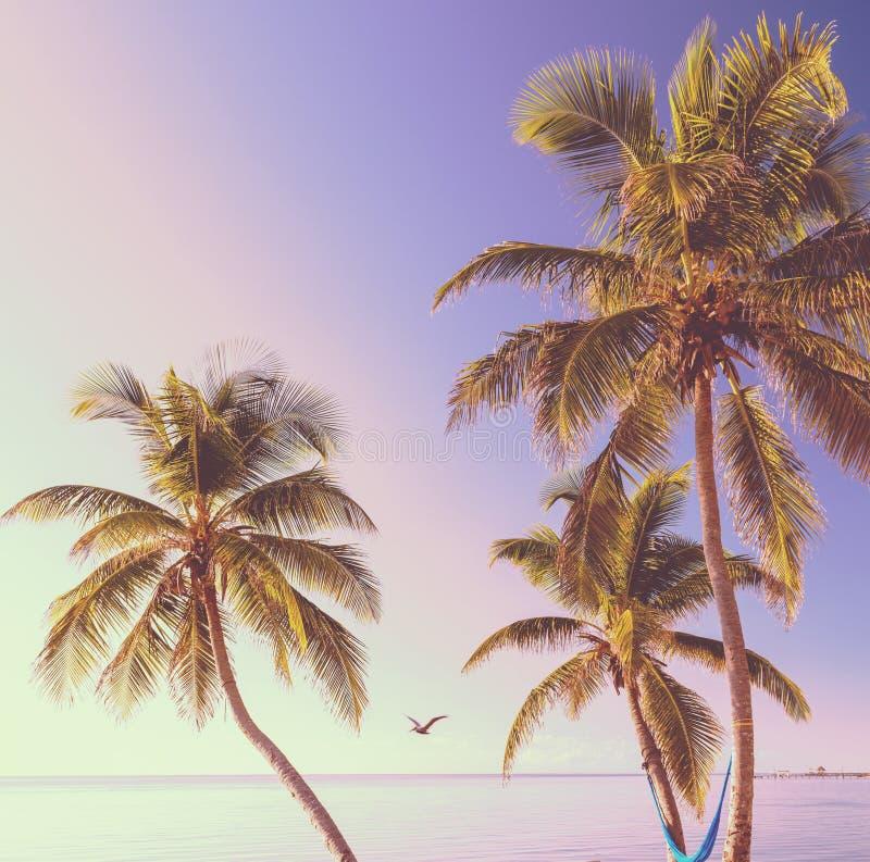 Retro Tropikalny Plażowy tło obraz stock