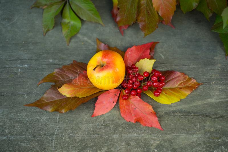 Retro uitstekend concept voor de herfst De herfstachtergrond met gele esdoornbladeren, rode appelen Kader van dalingsoogst op oud royalty-vrije stock foto