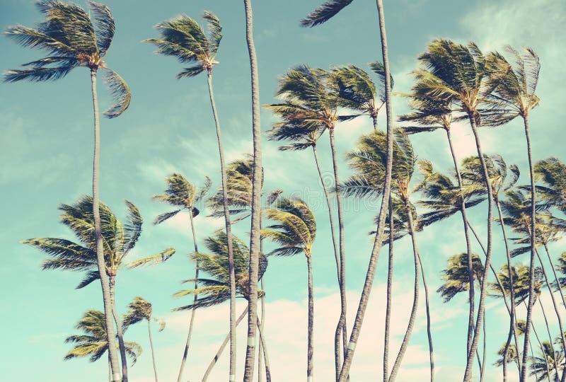 Retro Uitstekende Palm Trrees van Hawaï in de Wind stock fotografie