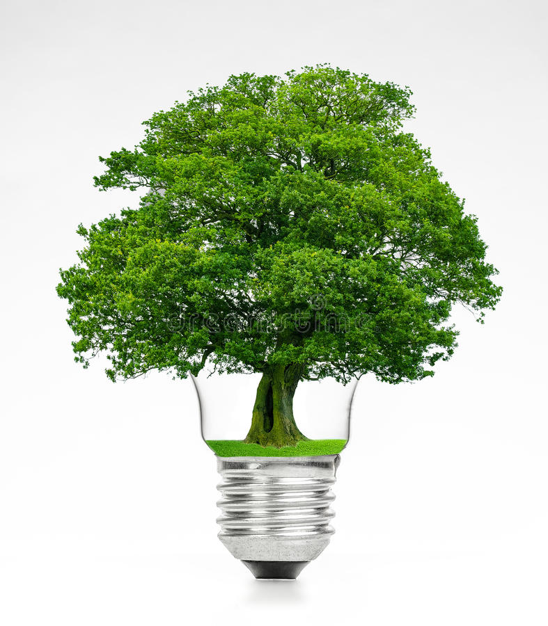 Retro vintage light bulb with green tree on top on white background stock images