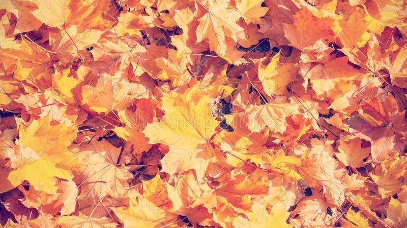 Retro- Weinlese tonte herbstliche Blätter lizenzfreie stockbilder