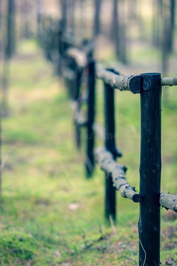 Retrocedendo nella distanza il recinto dai tronchi degli alberi nella foresta immagini stock