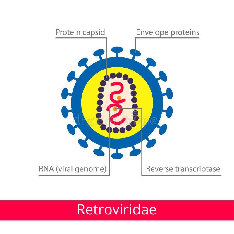 Retroviridae Ταξινόμηση των ιών διανυσματική απεικόνιση