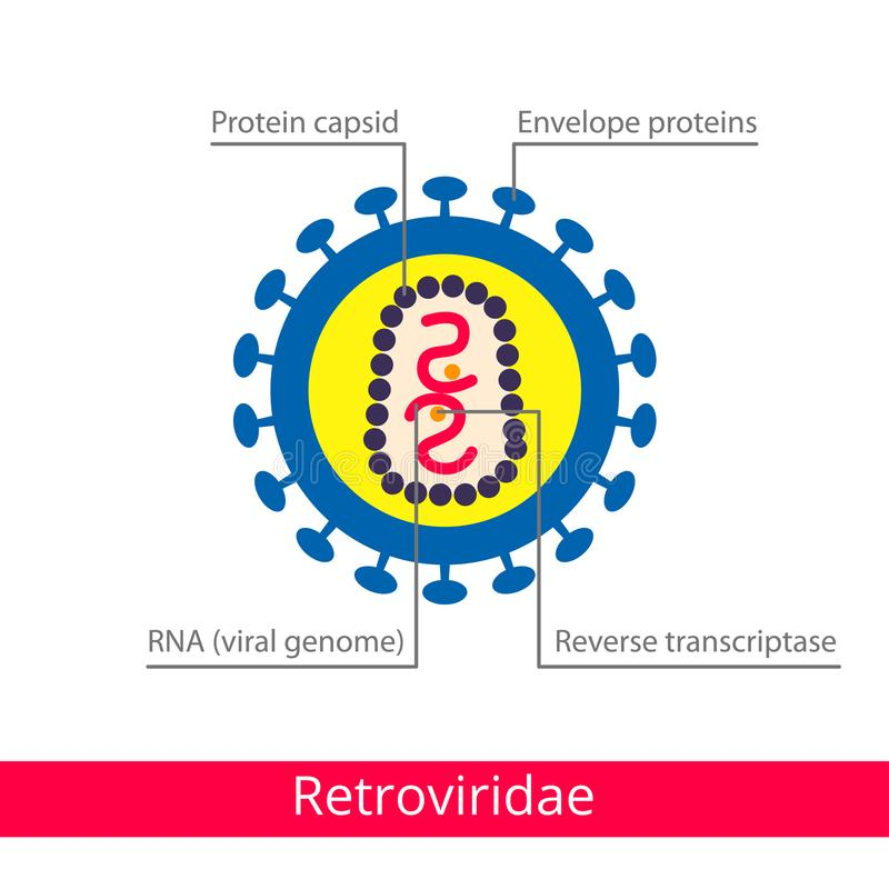 Retroviridae 病毒的分类 向量例证