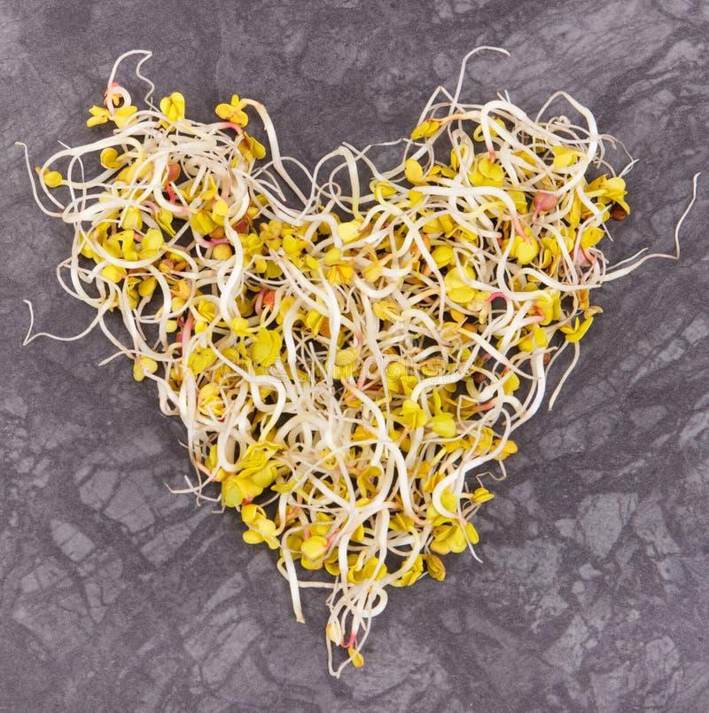 Rettichsprösslinge in Form des Herzens als Quellvitamine und Mineralien, gesundes Nahrungskonzept stockbilder