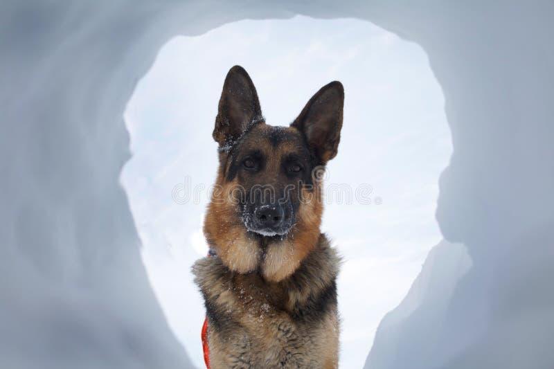 Rettungs-Hund A der meiste willkommene Anblick stockfoto