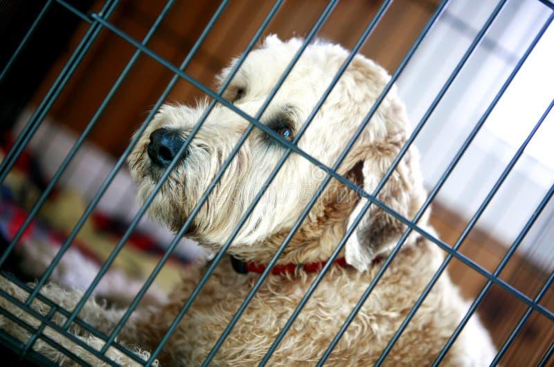 Rettungs-Shaggy Hund stockbilder