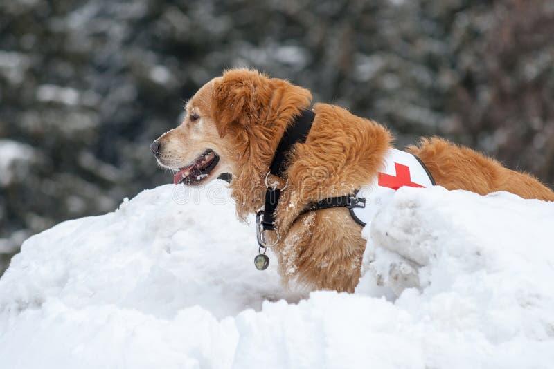 Rettungshund in der Tätigkeit lizenzfreie stockfotos