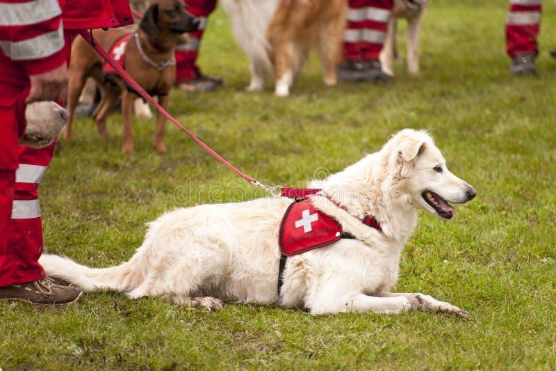 Rettungshund-Geschwader stockbild