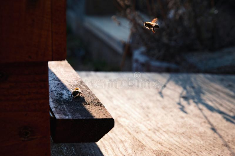 Return the bee to the hive. Nature background return the bee to the hive royalty free stock photos