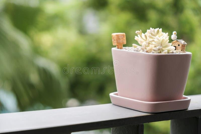 Returnera och arbeta i trädgården begreppet av den suckulenta växten i rosa blomkruka fotografering för bildbyråer