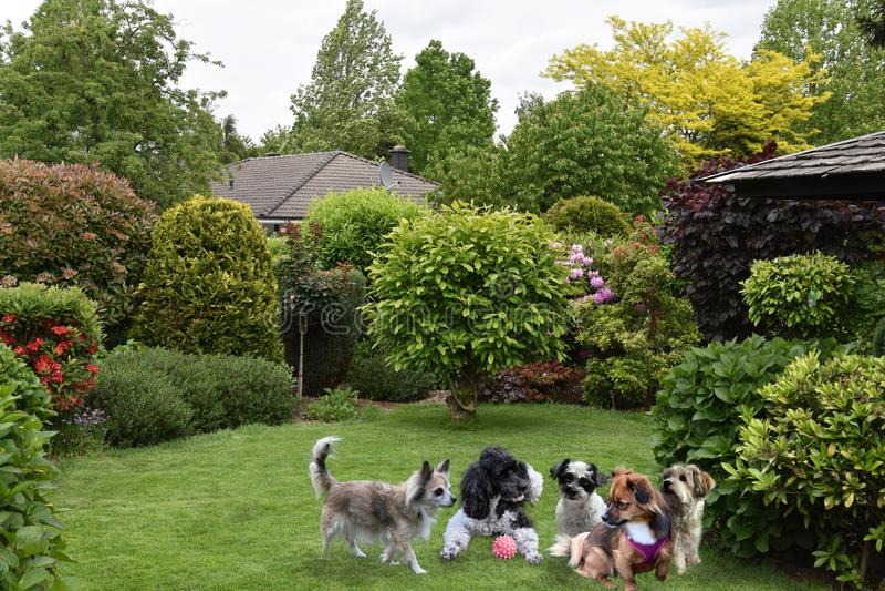 Reunião do cão no jardim imagens de stock