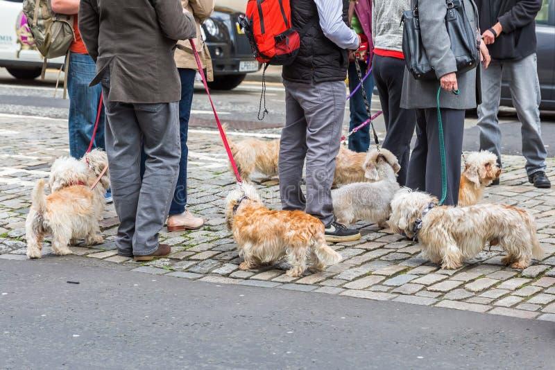Reunião do proprietário do Dandie Dinmont Terrier imagens de stock royalty free
