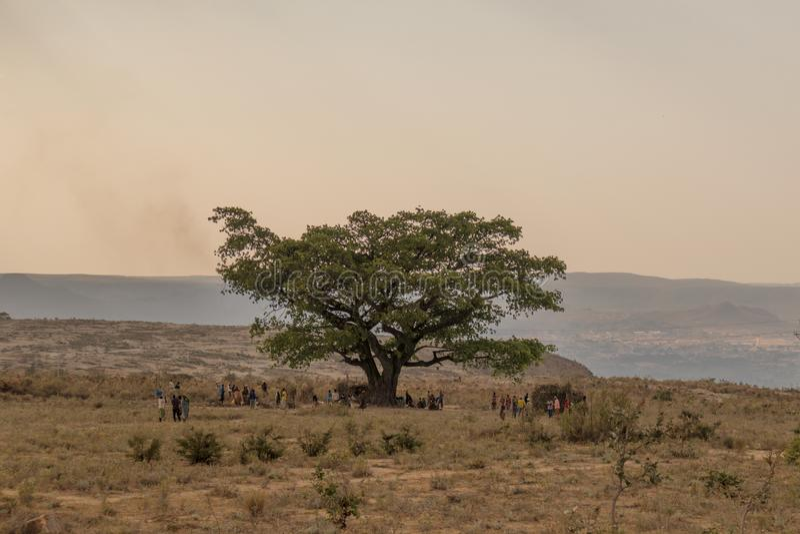 Reunión africana de la comunidad debajo de un árbol fotos de archivo