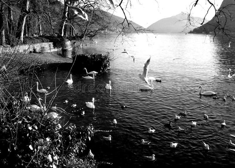 Reunión de pájaros en el lago foto de archivo