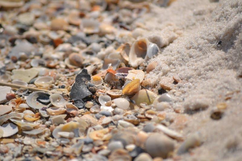 Reunión del Seashell imágenes de archivo libres de regalías