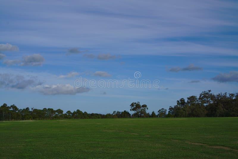 Reusachtig gebied van gras met blauwe hemel royalty-vrije stock afbeelding