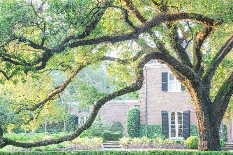 Reusachtig levend eiken boomhuis Houston, Texas, de V.S. royalty-vrije stock foto's