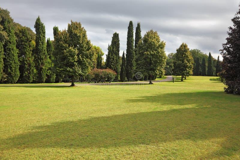 Reusachtig Vergeeld Gebied In Park Sigurta Royalty-vrije Stock Foto