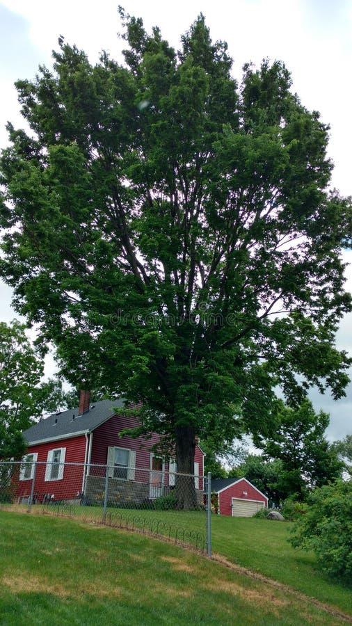 Reusachtige boom bovenop een heuvel stock foto's