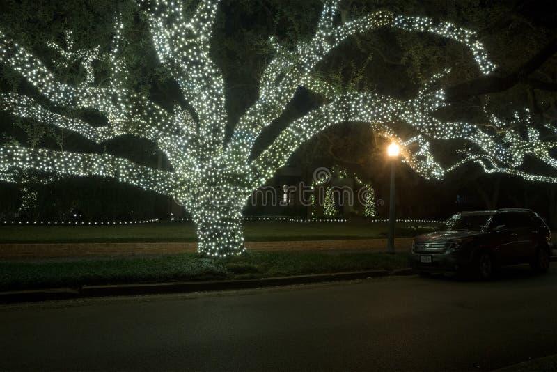 Reusachtige eikenbomen in de slingers van licht Het decor van Kerstmis Winte royalty-vrije stock fotografie