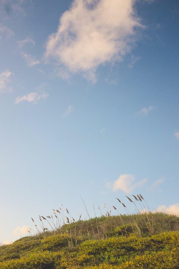 Reusachtige hemel over Cattails op een rollend gebied royalty-vrije stock fotografie