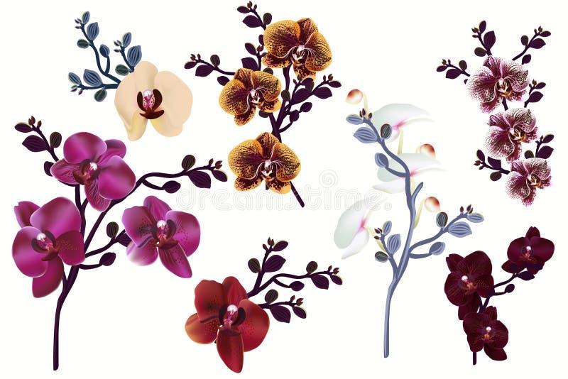 Reusachtige inzameling van vector realistische orchideebloemen voor ontwerp royalty-vrije illustratie