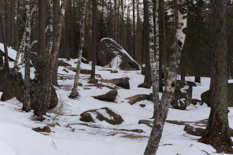 Reusachtige keien en stenen in het midden van een sneeuwbos stock afbeeldingen