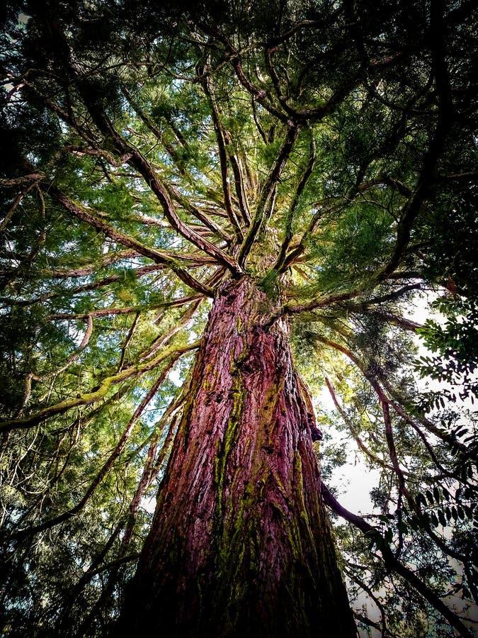 Reusachtige oude boom van onderaan royalty-vrije stock afbeeldingen